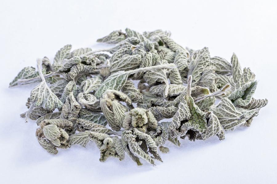 Marrubium vulgare horehound(white horehound) used to make a tea for soothing sore throat.