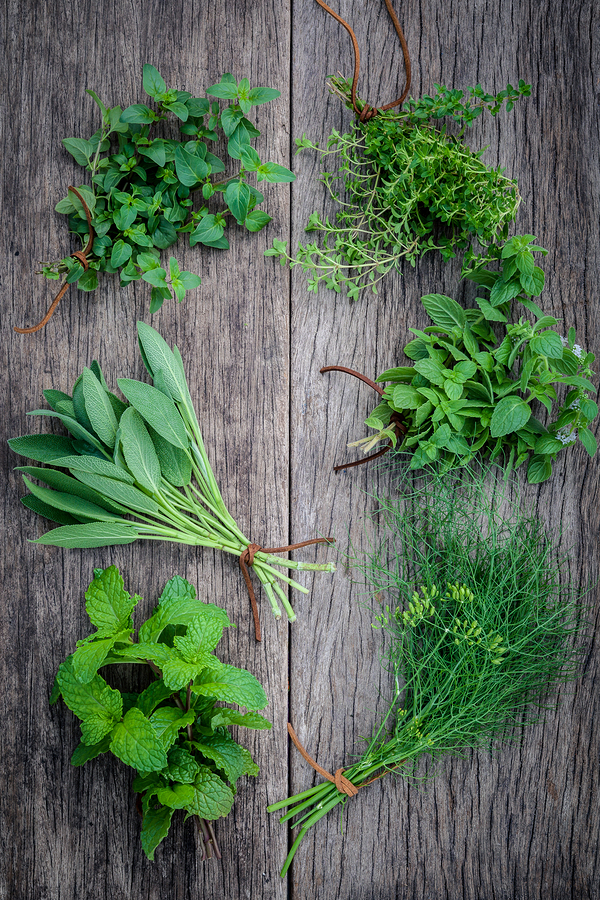 Various herbs from garden including peppermint for constipation