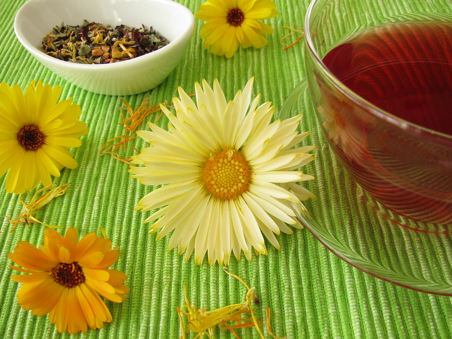 marigold infusion for gingivitis