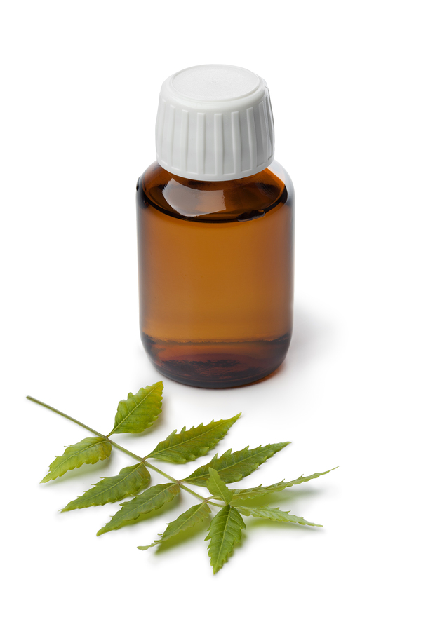 neem oil and leaves used as home remedies for head lice