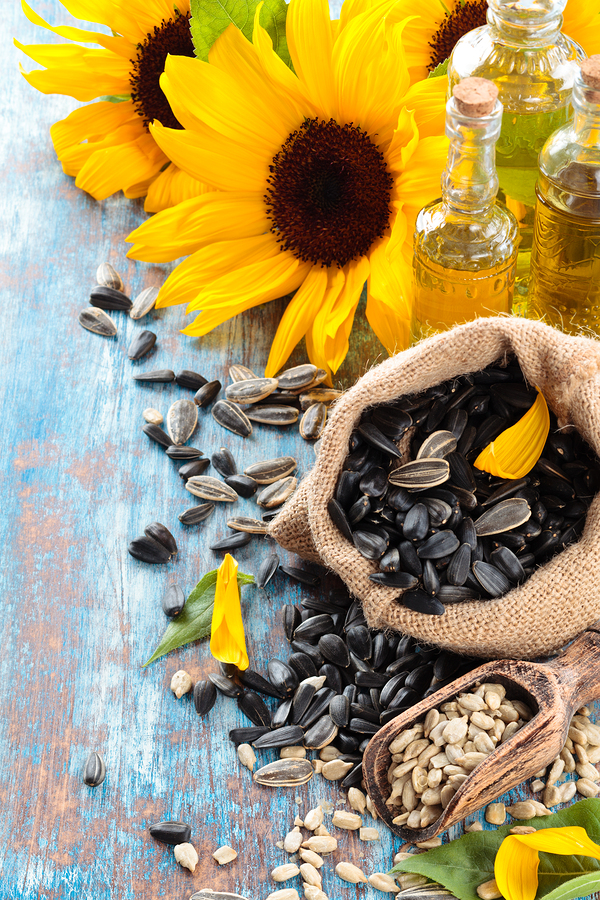 sunflower oil to get rid of gingivitis