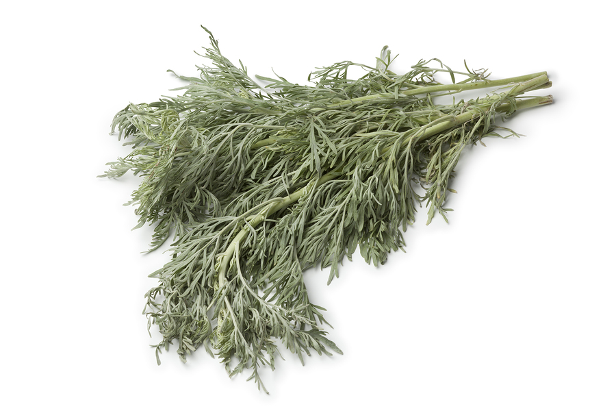 Fresh absinthe wormwood for candida