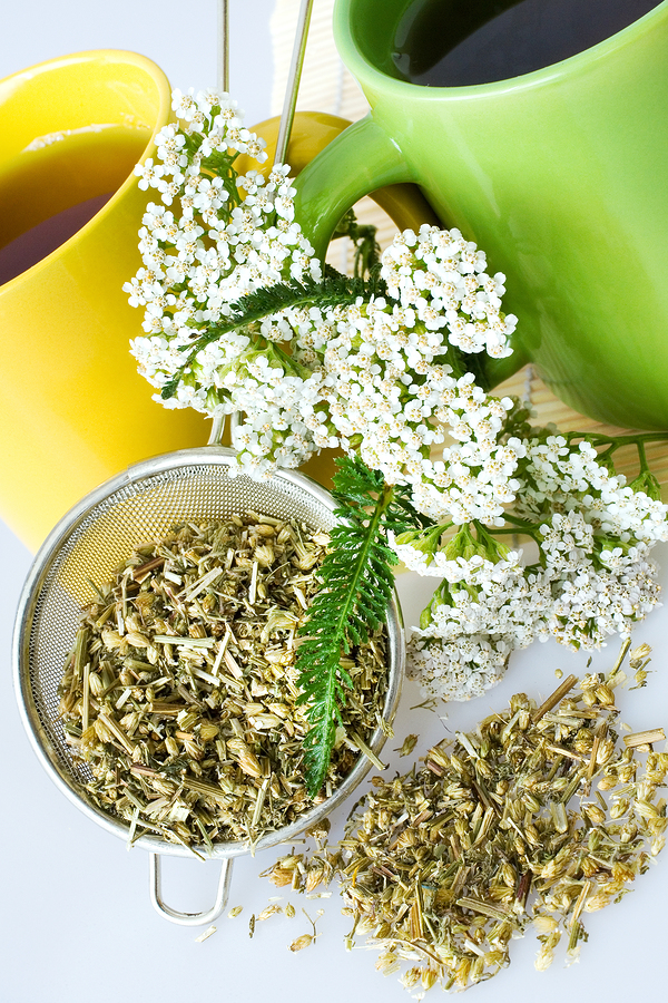 yarrow for candida and yeast infection