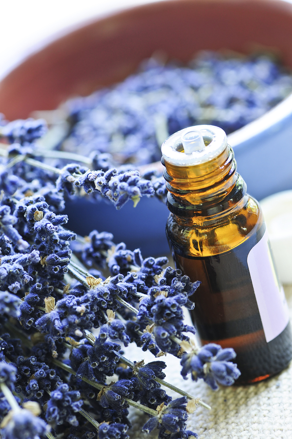 Lavender Essential Oil used to heal scabies infestation