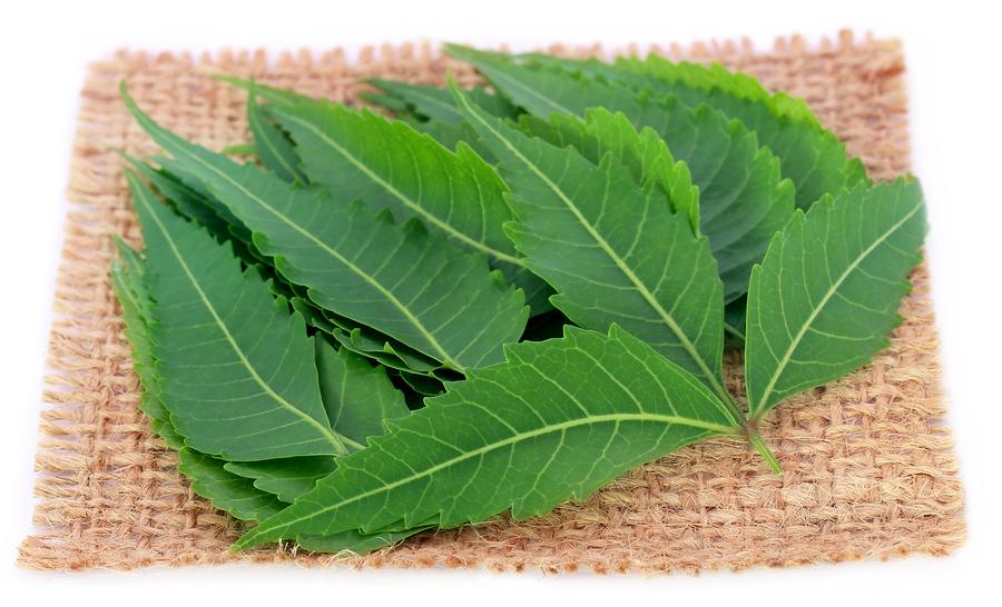 neem leaves used to prepare vaginal odor tea