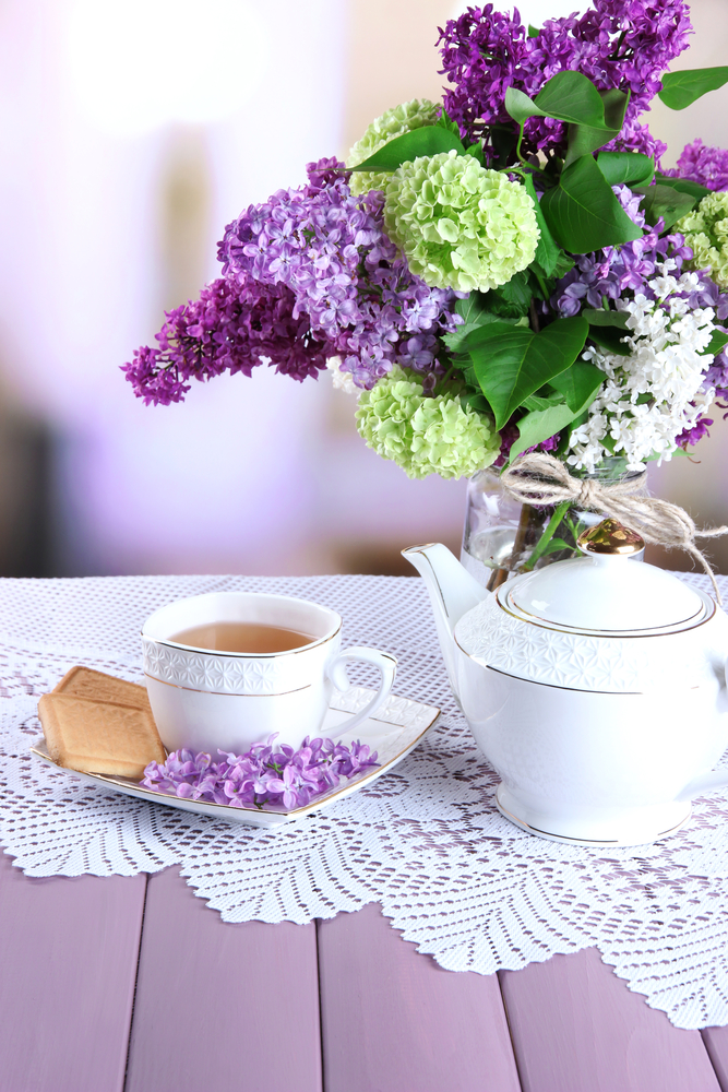 Hydrangea - home remedies for UTI