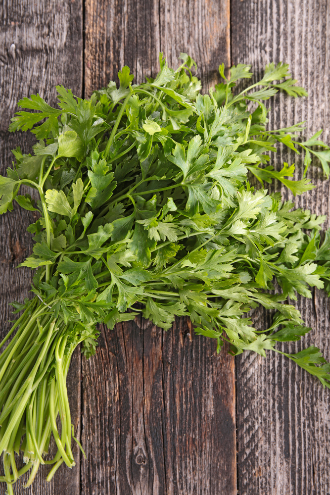 Parsley - home remedies for UTI