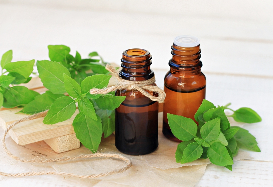 basil essential oil for ear infection