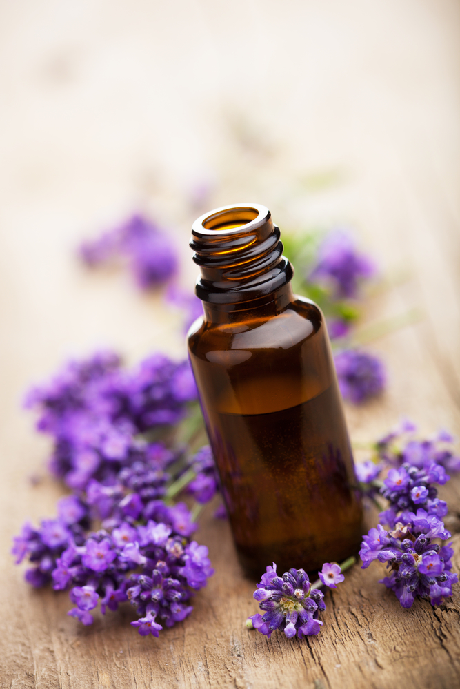 lavender essential oil for cold sore