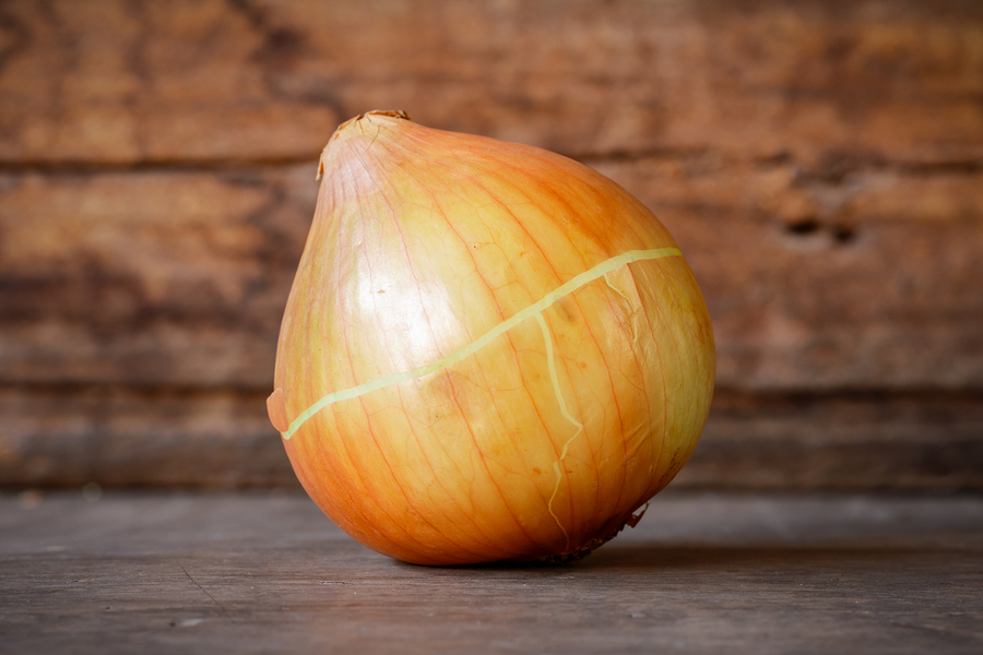 onion for ear infection