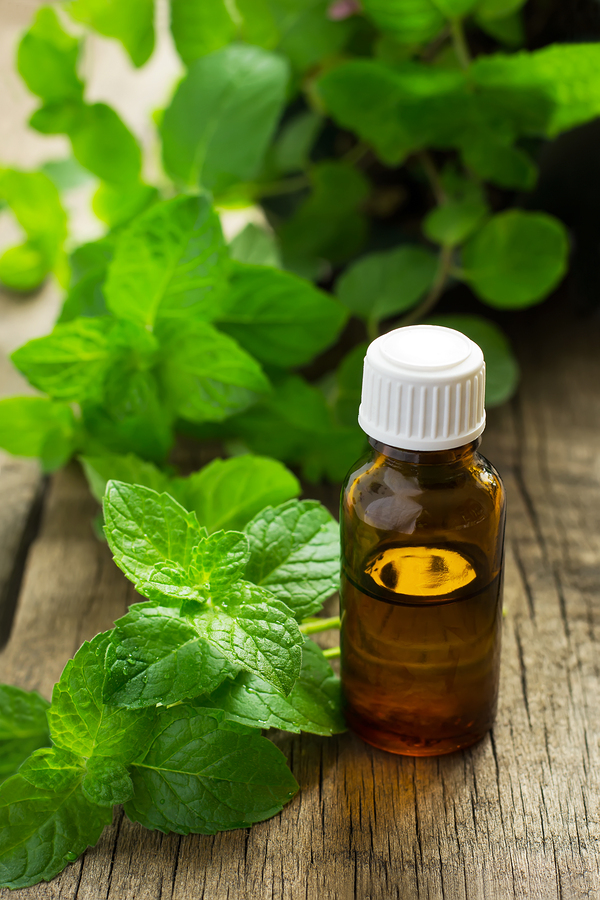 peppermint essential oil for headaches
