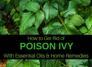 15 home remedies & essential oils for poison ivy