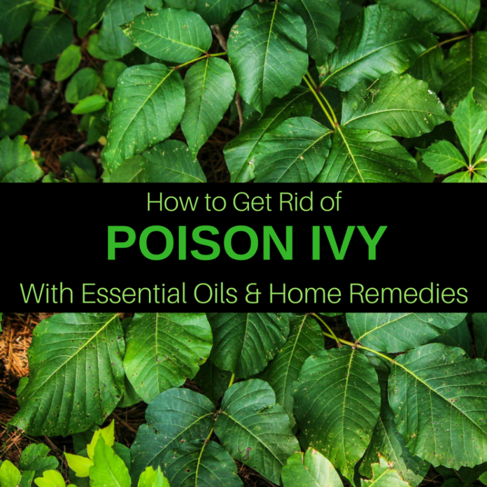 how to get rid of poison ivy on your balls